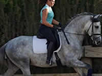 Caballo - Parsifal - Doma - Dressage